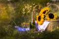 Picture champagne, sunflowers, basket, summer, glasses, bottle