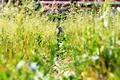 Picture cat, animals, grass, cat, Nature, Pyatkov_Denis