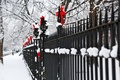 Picture winter, snow, trees, branches, nature, the fence, fence, red, rods, bows, holidays, bows, metal
