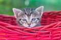 Picture basket, baby, kitty