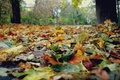 Picture nature, trees, yellow, autumn, leaves
