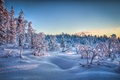 Picture landscape, snow, winter, nature, trees, forest