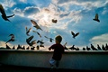 Picture the sky, birds, boy