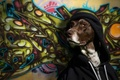 Picture dog, look, hood, graffiti, wall