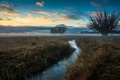 Picture fog, the sky, field, stream, glow, trees, clouds