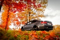 Picture BMW, e92, leaves, fall, autumn
