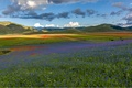 Picture field, the sky, flowers, mountains, meadow, Italy