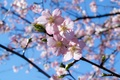 Picture branch, the sky, spring, flowering
