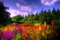 Picture flowers, the sky, clouds, trees, forest, glade