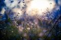 Picture macro, wildflowers, light, light, macro, wildflowers