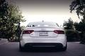 Picture back, Audi, white, Audi, white