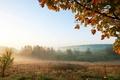 Picture fog, morning, field, landscape