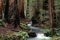 Picture forest, river, fresh