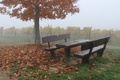 Picture Rain, Fall, Trees, November, Autumn, Benches, Rain, Leaves, Falling leaves, Fog, Foliage, November, Autumn, Fog