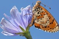 Picture flower, the sky, butterfly, wings, petals, insect, moth
