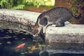 Picture cat, thirst, fish, cat, the situation