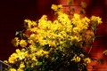 Picture flowers, widescreen, widescreen, widescreen, the Wallpapers, Wallpaper, HD wallpapers, Golden balls, full screen, Bush, rudbeckia, ...