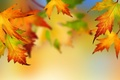 Picture bright colors, autumn, leaves