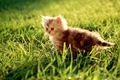 Picture grass, Kitty, green