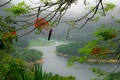 Picture flowers, branch, Puerto Rico, mountains, island, fog, tree, river