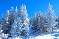 Picture spruce, slope, snow, winter, the sky, trees, forest