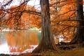 Picture autumn, lake, Tree