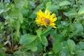 Picture dandelion, bee, rain