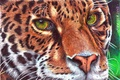 Picture mustache, animal, leopard, predator, look, painting, green eyes, face