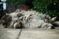 Picture fluffy, Kote, thick, asphalt, Tomcat, lying, cat