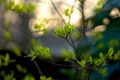 Picture bokeh, leaves, spring, branches