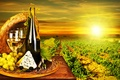 Picture bottle, wine, Dor blue, cheese, white, glasses, vineyard, the sun, olives, grapes
