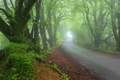 Picture road, forest, fog, Nature, spring, haze