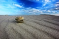 Picture macro, the sky, shell, sand