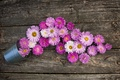Picture pink, bucket, asters
