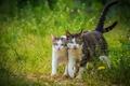 Picture cat, walk, We with Tamara go in pair, a couple, cat