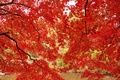 Picture Park, trees, leaves, the crimson, autumn, maple, branches, pond