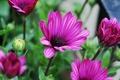 Picture purple, stems, petals