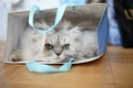 Picture cat, look, package, Fluffy, cat