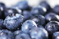 Picture berries, harvest, blueberries, drops