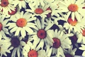Picture chamomile, pretty flowers, vintage, bouquet