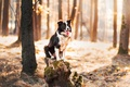 Picture dog, forest, each