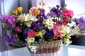 Picture flowers, Ranunculus, bouquet, basket, different, freesia, hyacinths, beautiful