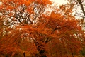 Picture Trees, Colors, Forest, Autumn, Trees, Forest, Falling leaves, Fall, Foliage, Autumn