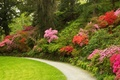 Picture flowers, Park, trees, the bushes, Azalea, UK, Bodnant Gardens Wales, track, lawn