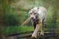 Picture nature, tiger, style, background