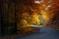 Picture orange, nature, asphalt, trees, road, leaves, yellow, autumn, forest