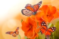 Picture flowers, macro, petals, wings, insect, butterfly