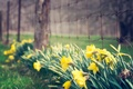 Picture flowers, flowers, widescreen, leaves, HD wallpapers, Wallpaper, fence, leaves, greens, full screen, flower, the fence, ...