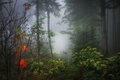 Picture fog, autumn, forest, leaves