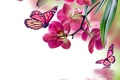 Picture flowers, flowers, butterflies, orchid, pink, reflection, butterfly, water, Orchid, beautiful